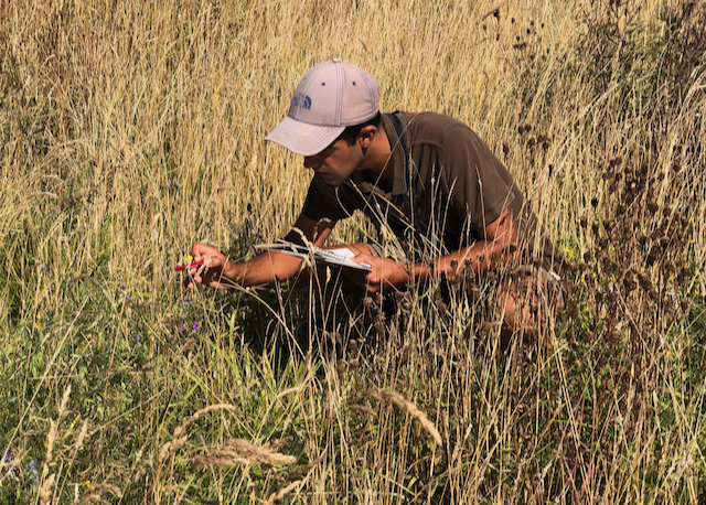 Ajay Tegala butterfly transect survey census