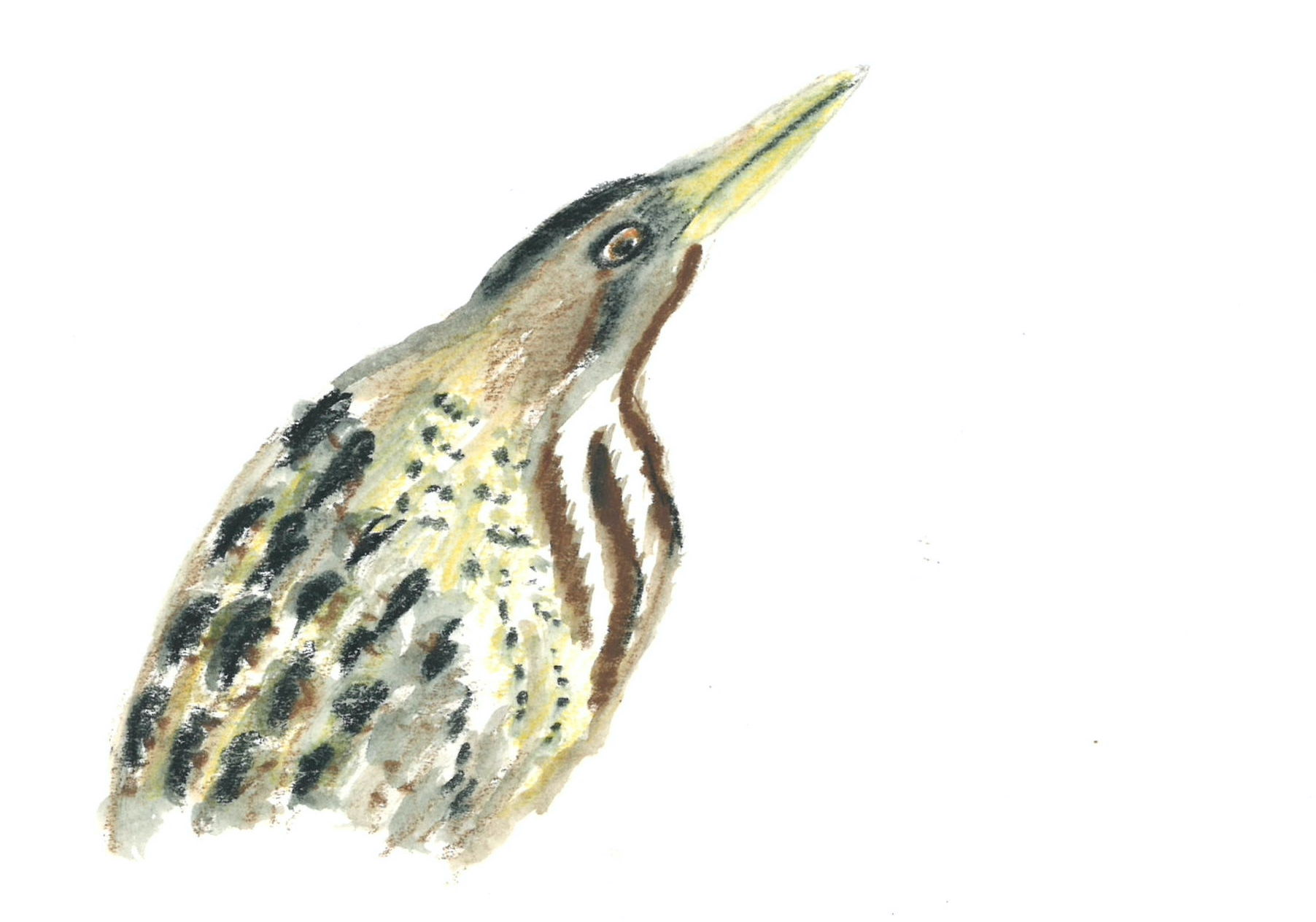 Bittern painted by Ajay Tegala