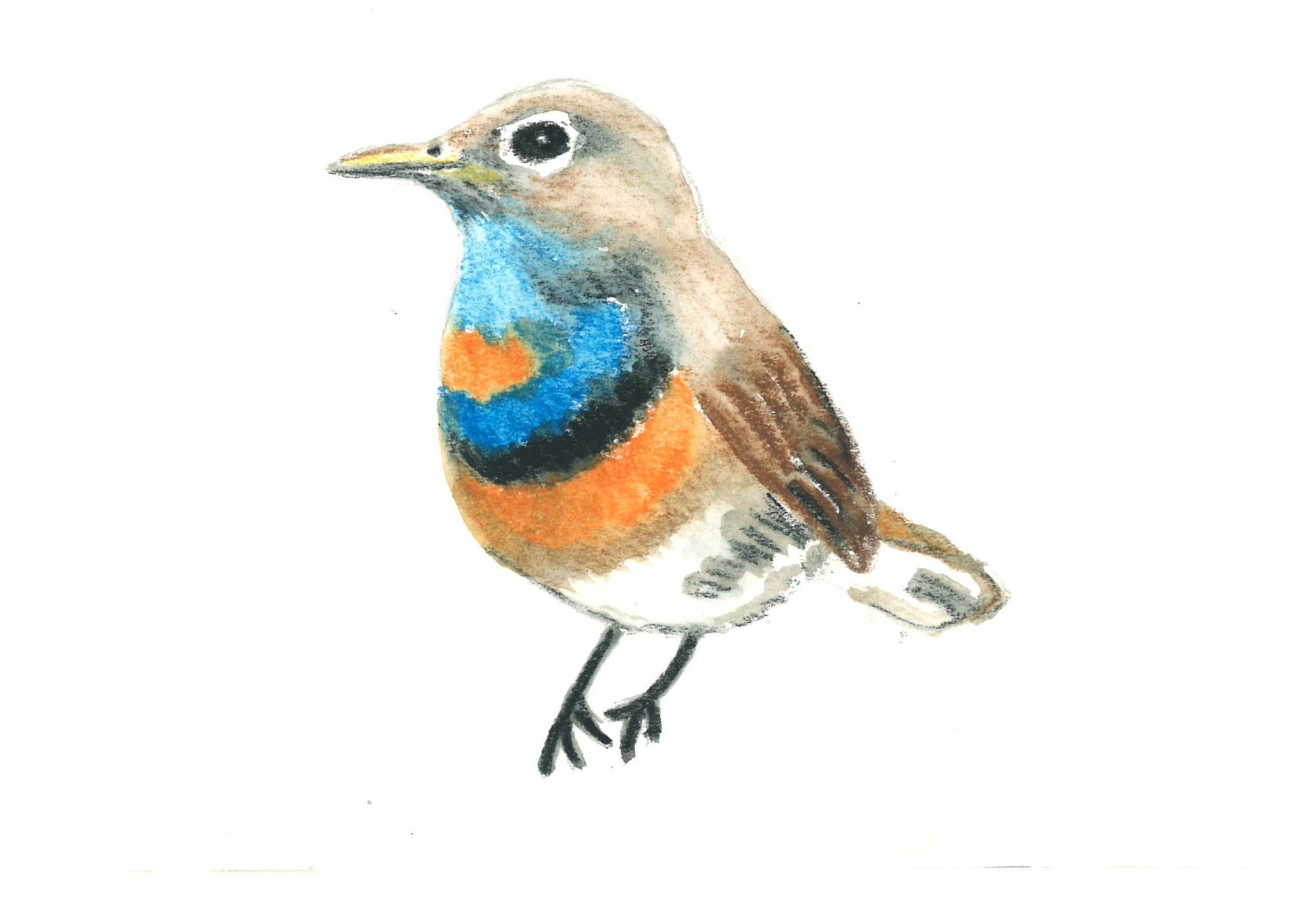 Bluethroat painted by Ajay Tegala